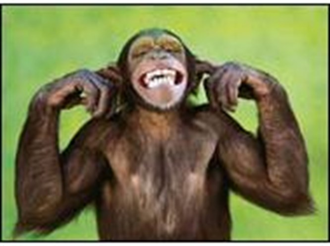 Bovlingin kralı maymun